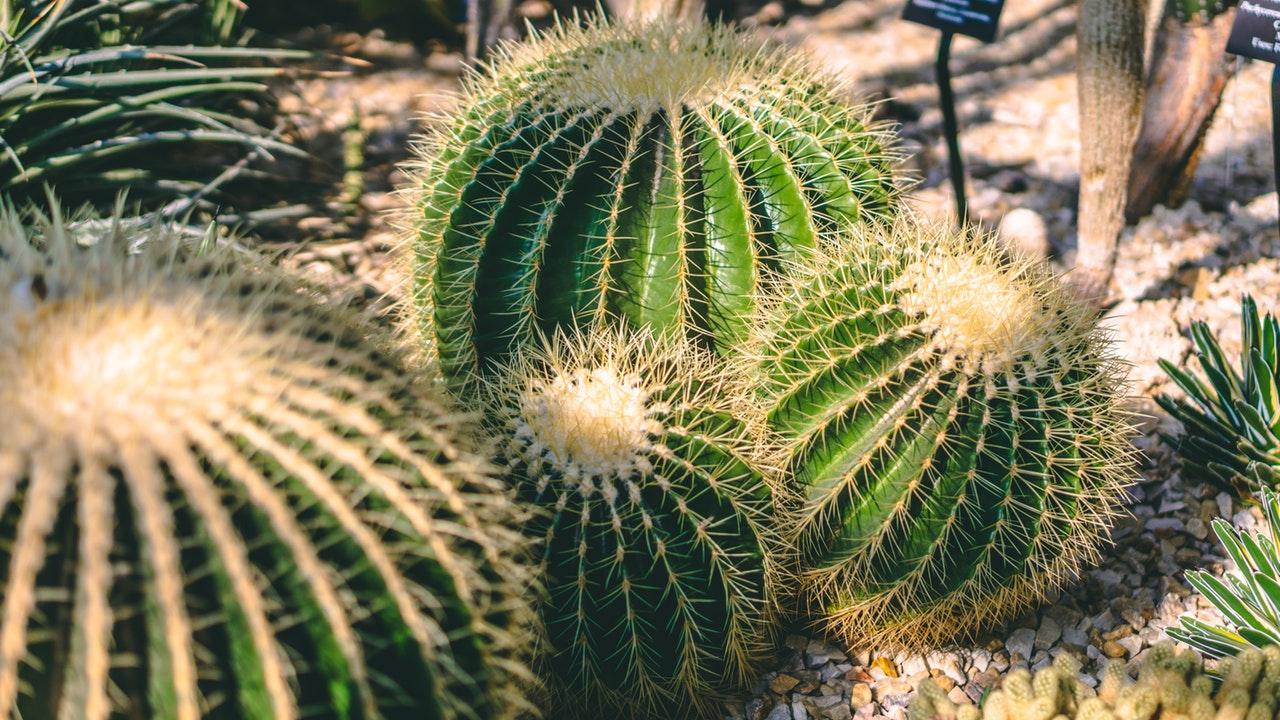 paisajismo - cactus