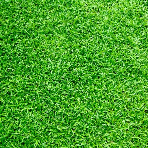 Landscaping: new gardening trends