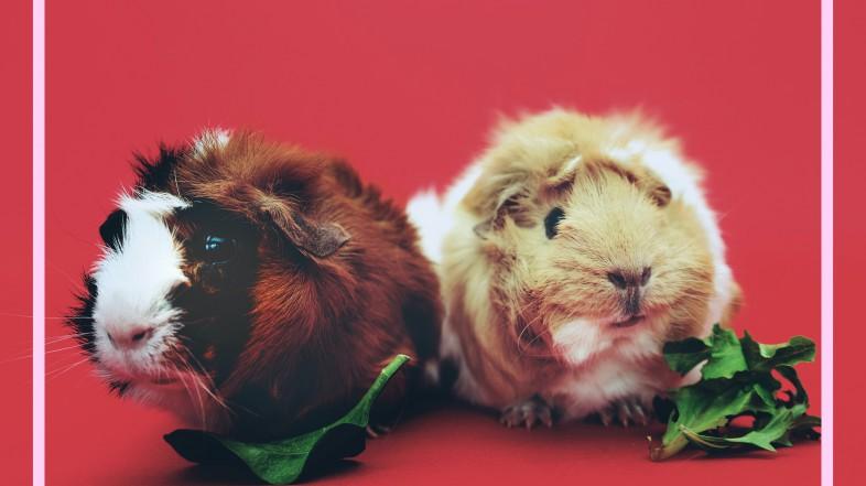 #ViernesDeInspiración: Pet-influencers